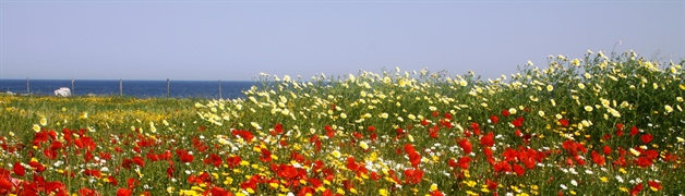 flowers  puglia guided walking tour