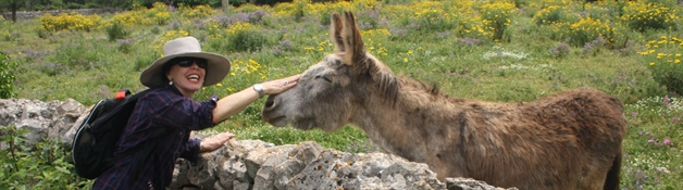 donkey puglia guided walking tour