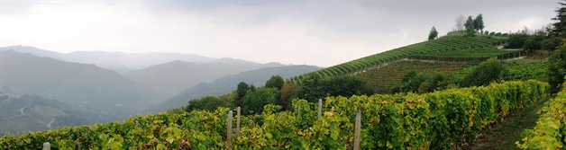 8 day walk through the vineyards of Piedmont | 1  Northern