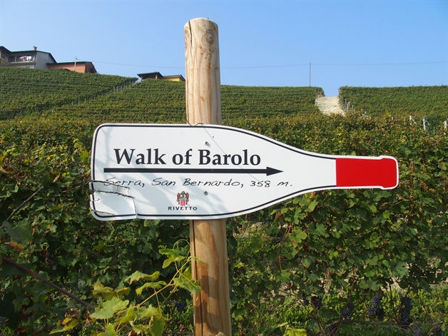 walking in piedmont - barolo vineyards