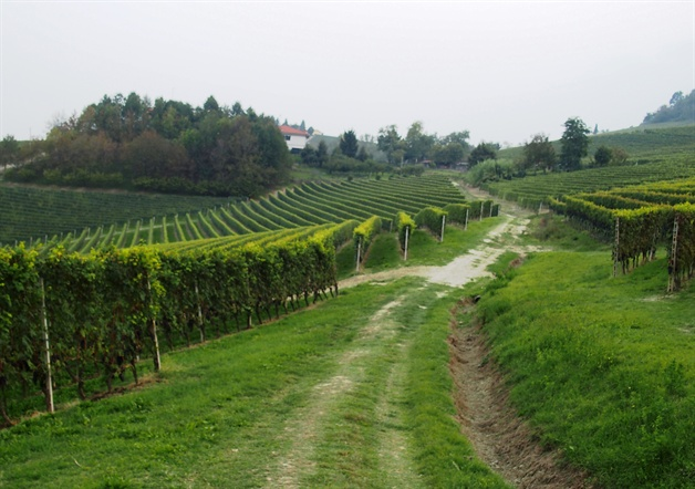 walking in piedmont - trail through barolo vineyards