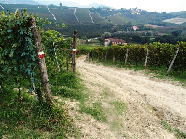 walking in piedmont - trails through the vineyards