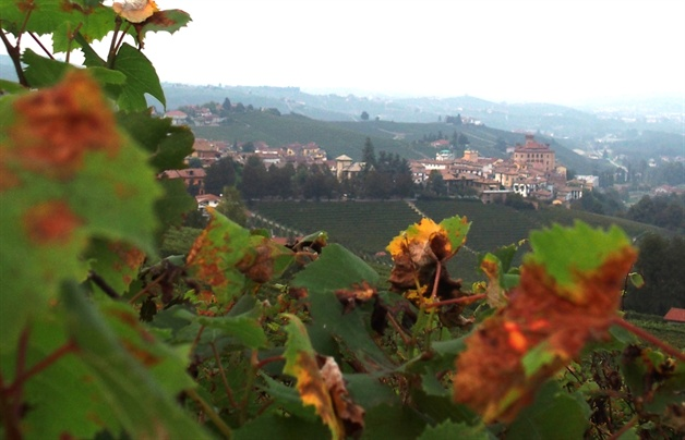 walking in piedmont - barolo town