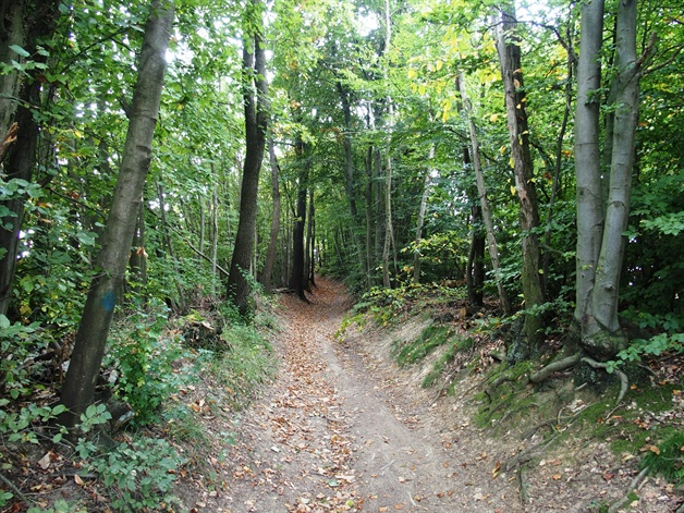 walking in piedmont - beech forests in the 'alta langhe'