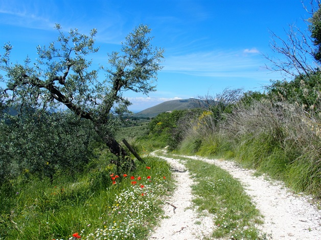 Camino Via Francigena Way of St Francis Lazio self-guided 8