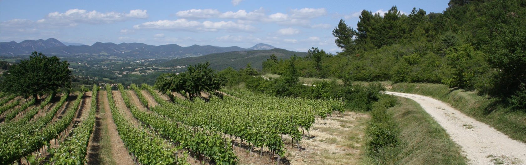 4.  Elsewhere.... Provence, Avignon and the Montmirial mountains