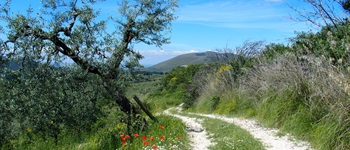 2. Central Italy: Cammino of St Francis  a 17 day walk, Assisi to Rome:  Overview